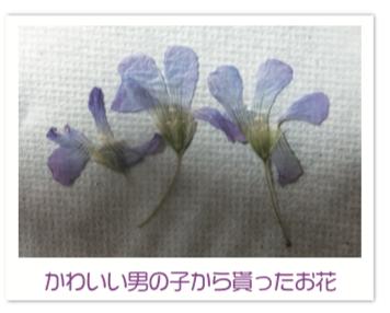 かわいい男の子から貰ったお花