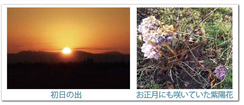 初日の出・紫陽花